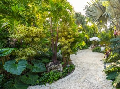 Tropical Garden Oasis at Your Backyard
